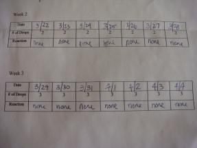 bottom portion of worksheet