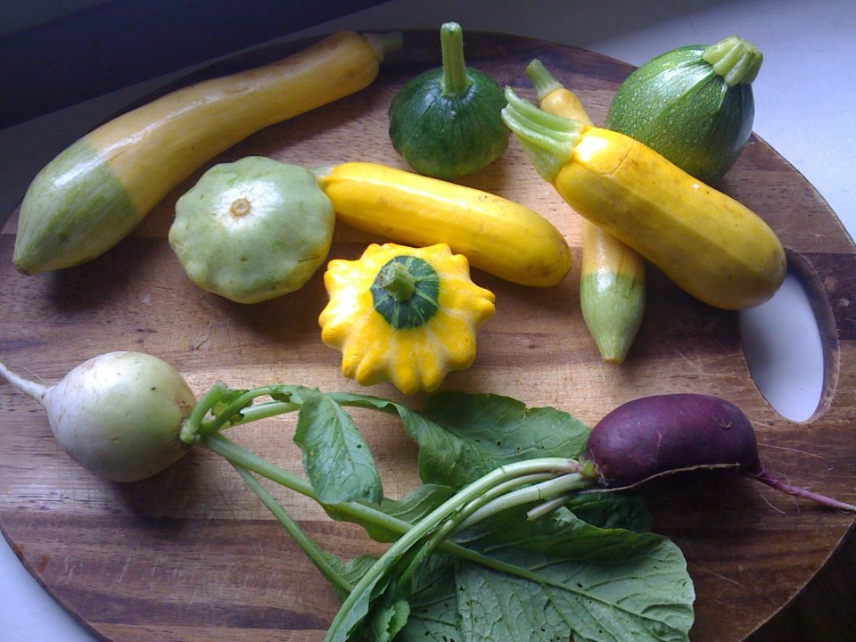 Assortment of squash and radishes from my CSA