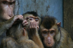 worried monkeys